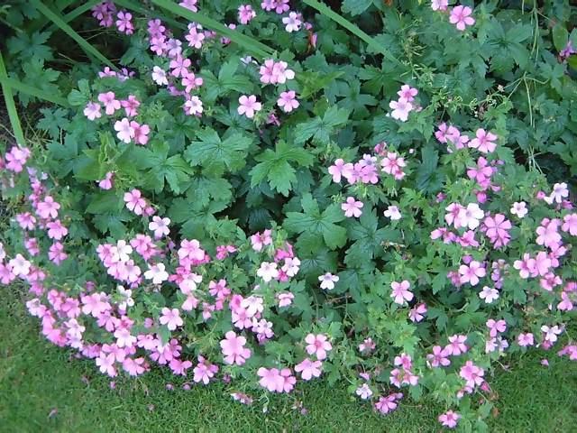 Flowers Tiny Lavender Pink